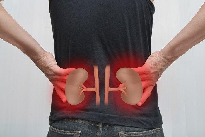 La importancia de los riñones y seis consejos para cuidarlos