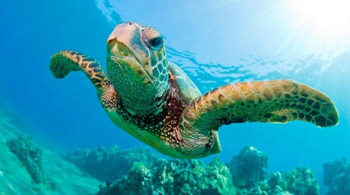 Concurso de arte por tortugas