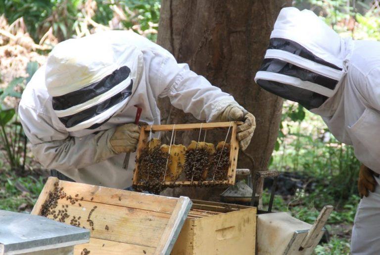 ¿Qué hacer si abejas se instalan en su vivienda?; La alcaldía responde