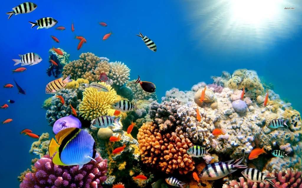 Curiosidades de Honduras Arrecifes