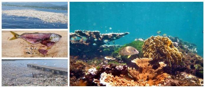 arrecife de tela