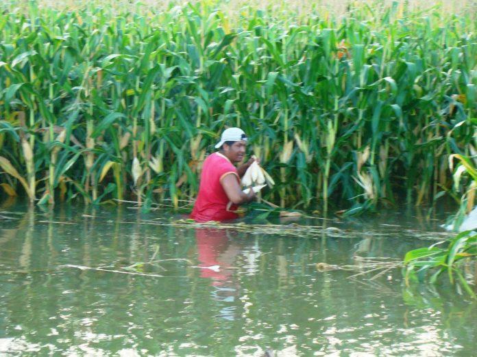 Lluvias afectarán cultivos en honduras