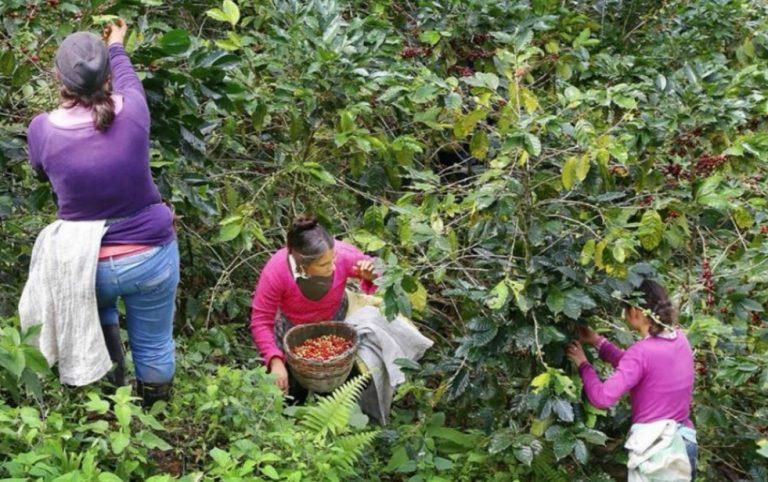 """Caficultores """"hartos"""": Las cuatro preguntas que hacen al CONACAFÉ"""