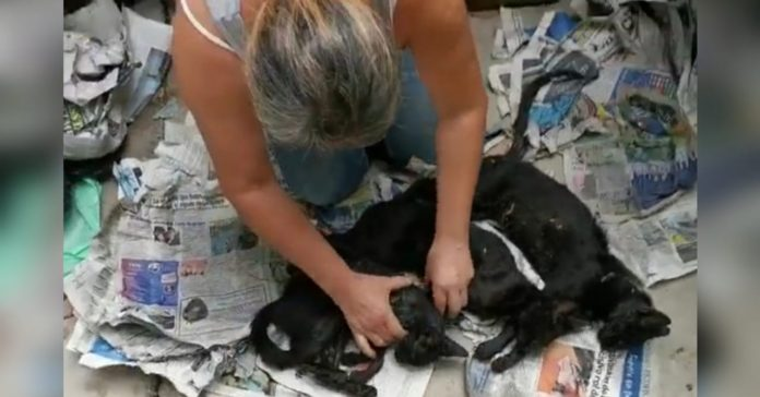 envenenan gatos en Tegucigalpa