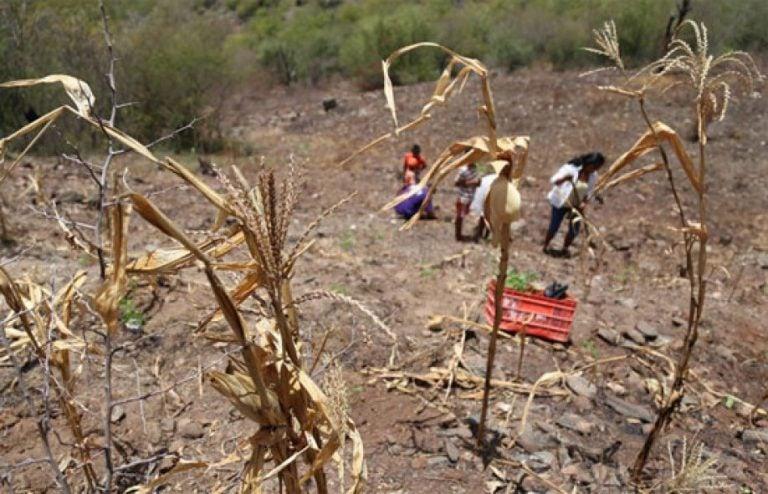 Honduras: 13 departamentos en condición de crisis por inseguridad alimentaria