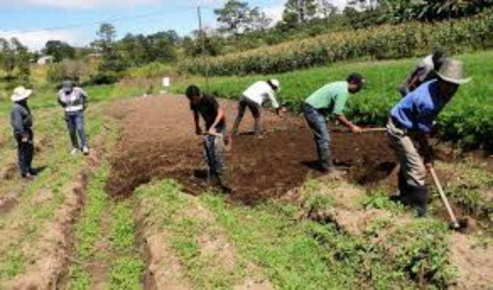 Programas agrícolas FFAA