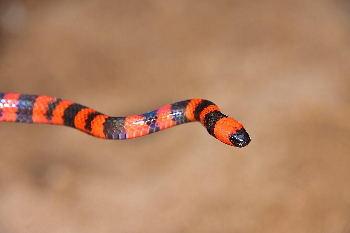especies endespecies endémicas Islas de la Bahíaémicas Islas de la Bahía