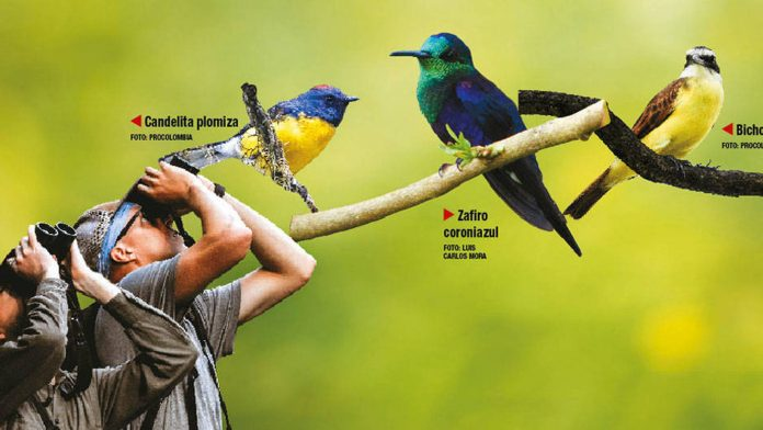 Global Bird Weekend participar