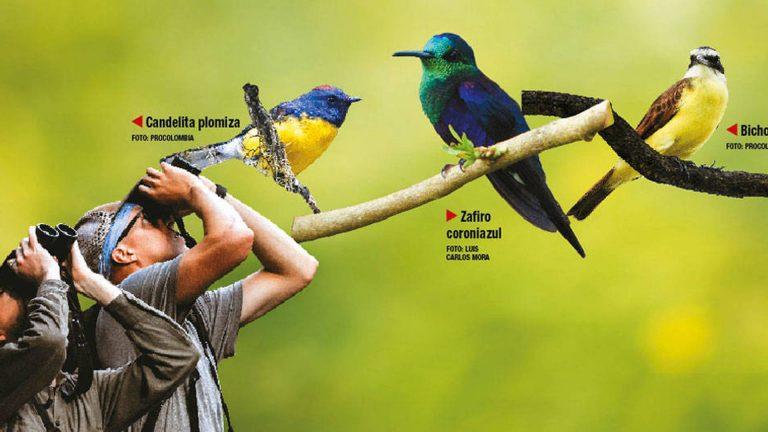 ¡Puedes participar! Global Bird Weekend se celebra este 17 y 18 de octubre