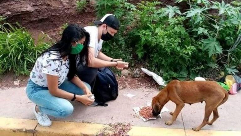 Más de 35 mascotas de la calle encontraron hogar gracias a Patitas UNAH