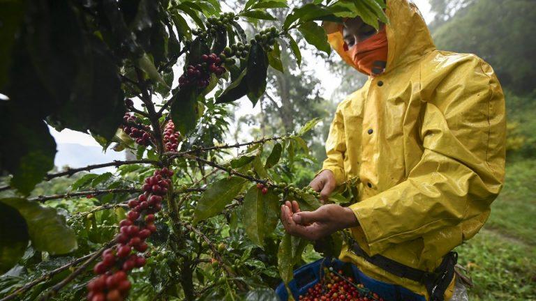 """Cafetaleros exigen centros de salud equipados, no """"kits de producción"""""""