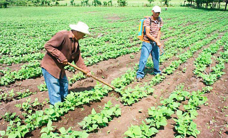 MP declara inconstitucional Programa de Desarrollo Agrícola otorgado a FFAA