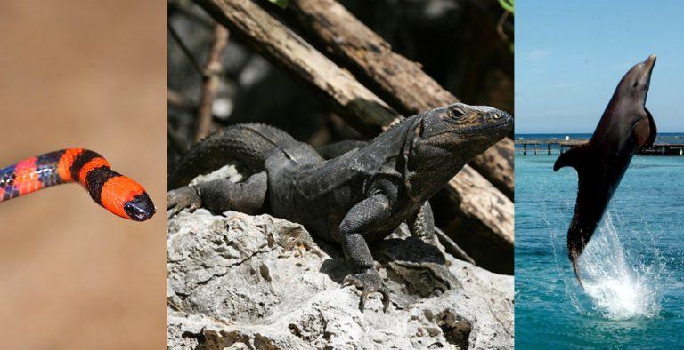 ¡Asombroso! Conozca las especies endémicas que existen en Islas de la Bahía