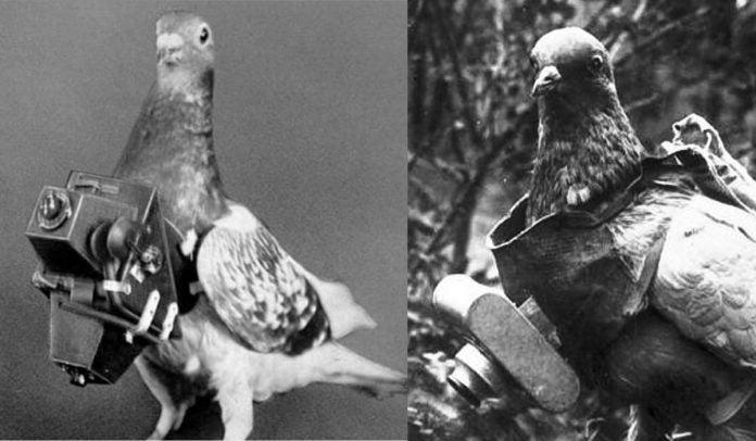 fotografías aéreas palomas