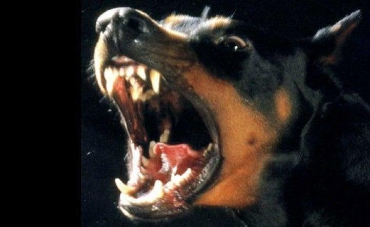 Doctor: Dos niños hondureños pierden su pene tras ataque de sus perros