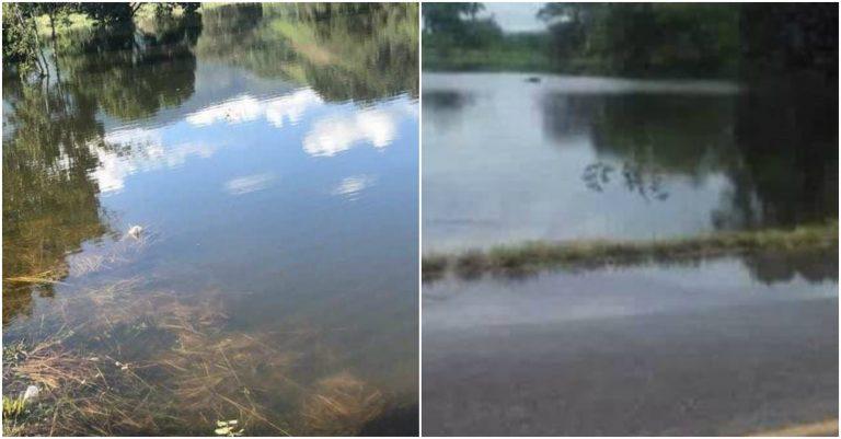 Lago de Yojoa «se sale» a calle pavimentada; saca culebras y lombrices
