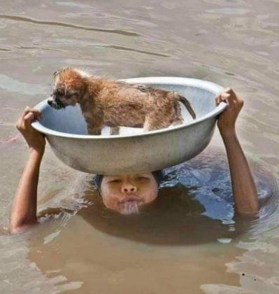 catracho moto acuática salva perrito