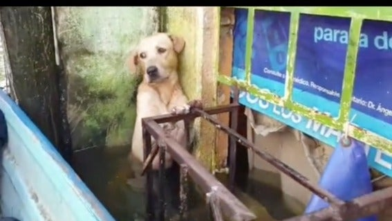 video perro México