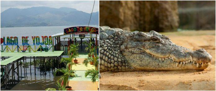 cocodrilos en el Lago de Yojoa
