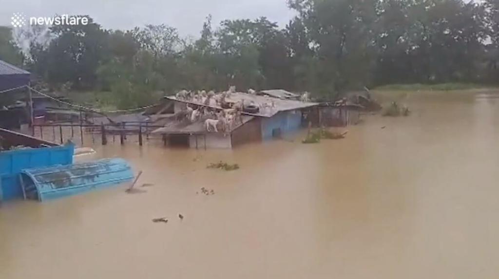 perros atrapados inundación filipinas
