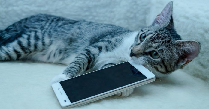 app traduce maullidos gatos