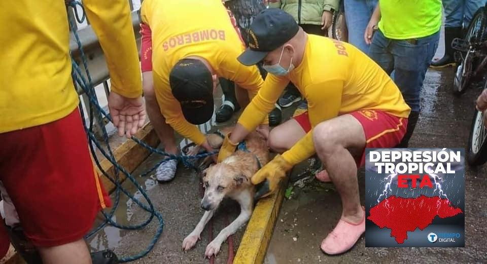 mascotas rescatadas de eta