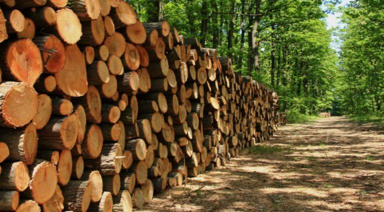 UE y FAO promueven proyecto para legalizar el comercio forestal en Honduras