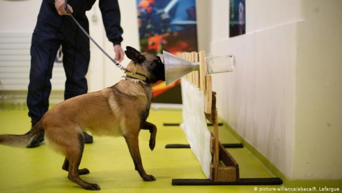 perros para detectar el COVID