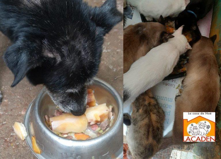 """""""No alcanza para alimentos"""": La Casa de Noé dejaría de rescatar animales por falta de apoyo"""
