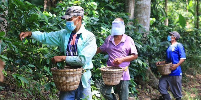 productores hondureños café