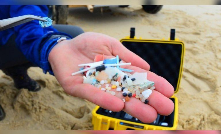 Microplásticos no solo dañan arrecifes; los encuentran por primera vez en placenta humana