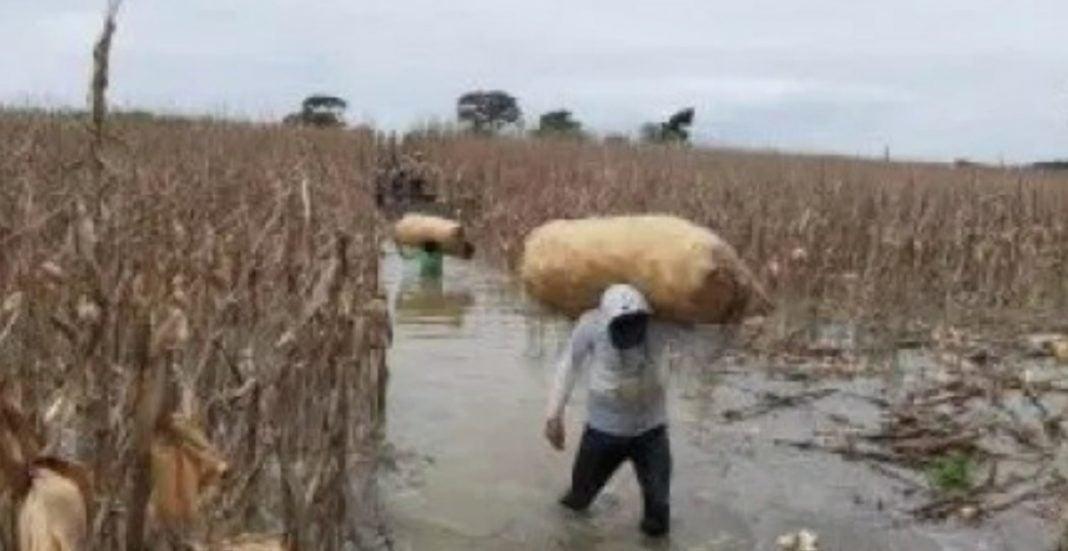 gabinete sector agrícola
