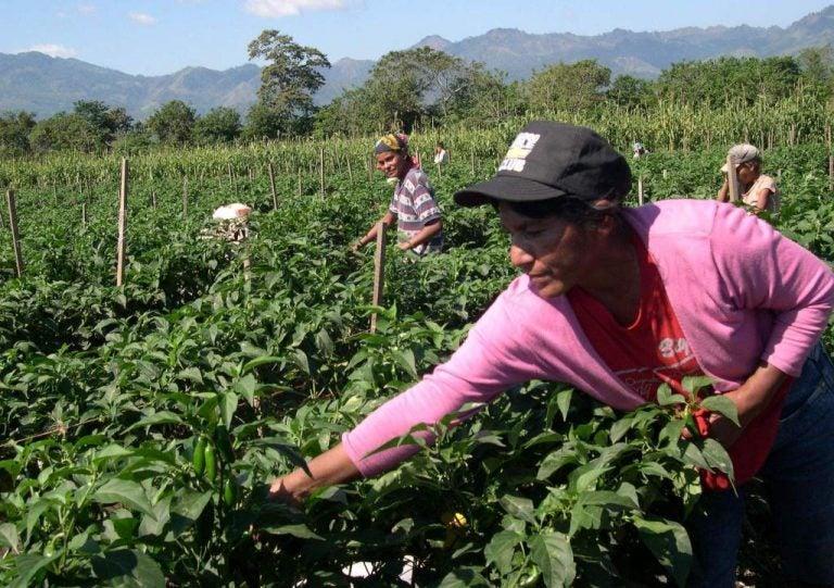 COHEP sugiere financiamiento con 0 % de interés para sectores productivos