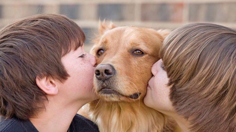 SALUD  ¿Qué enfermedades pueden transmitir las mascotas?