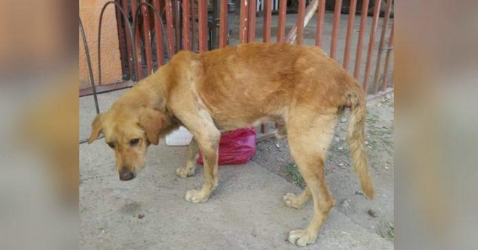 indigente violó perrito en Comayagua