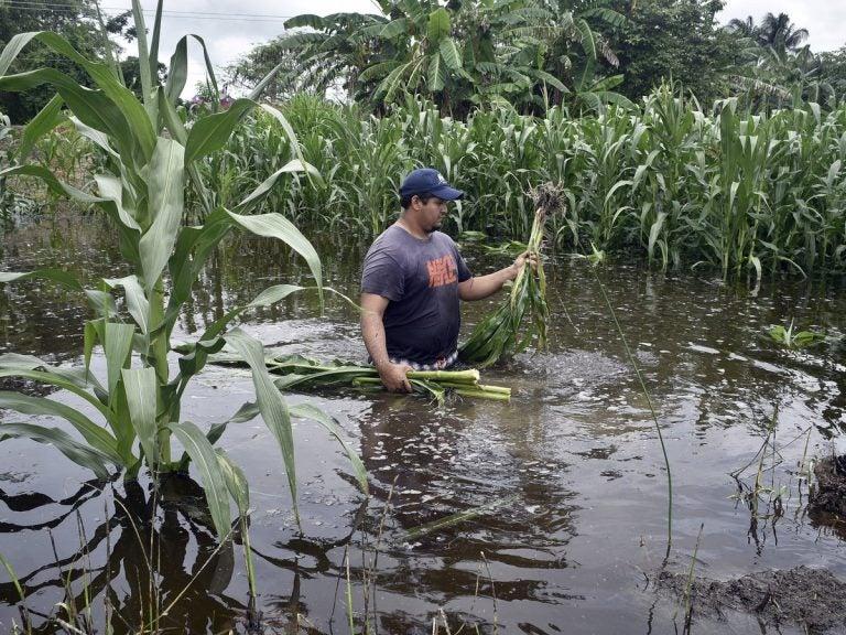 Honduras perdió 65 % de los cultivos: el agro avizora crisis alimentaria en 2021