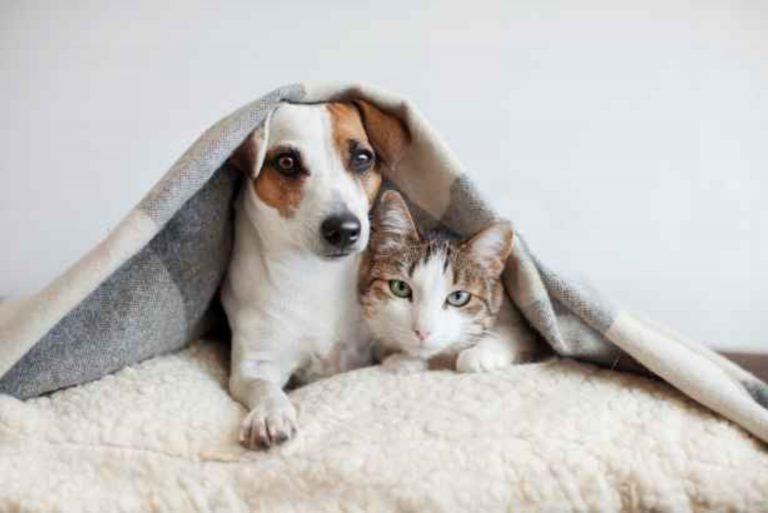 ¿Cómo puedo proteger a mi mascota durante el frente frío?