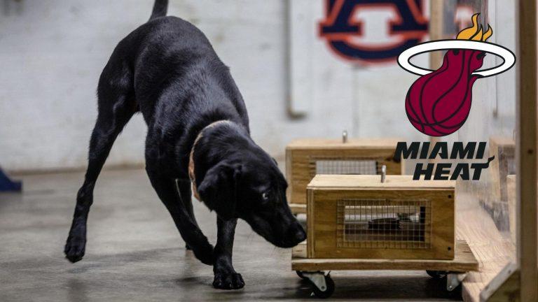 Miami Heat y su peculiar forma de detectar COVID-19: Con perros