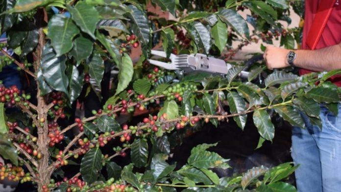 maquinas cortadoras café Olancho