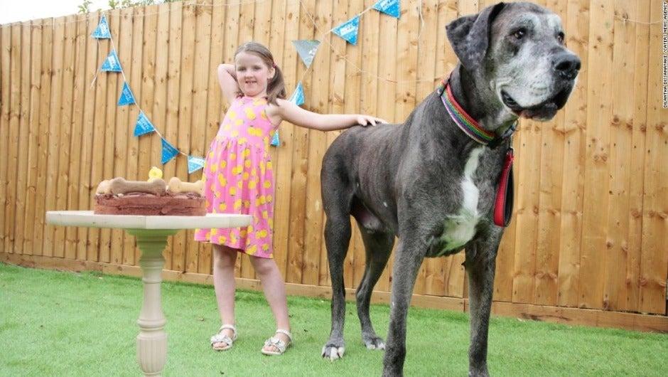 Perro más grande del mundo