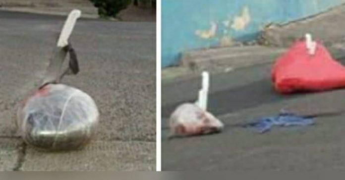 cuerpos empaquetados capital cerdos