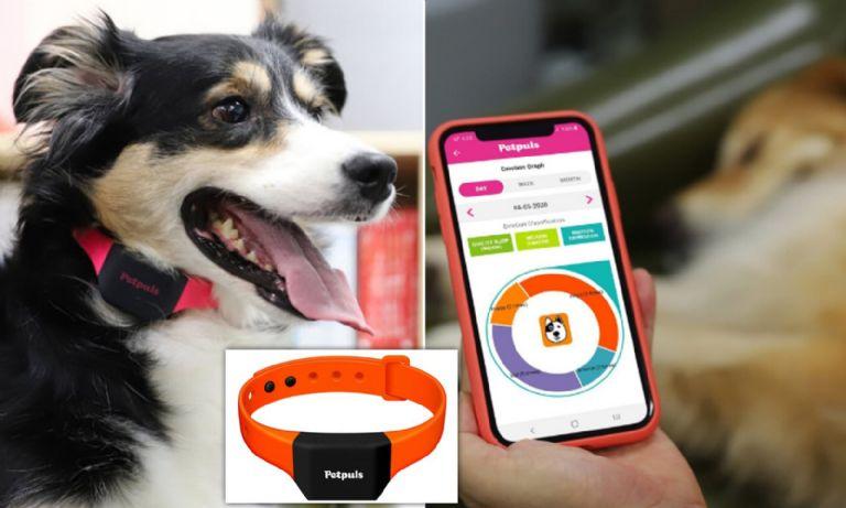 Crean aplicación que interpreta y traduce las emociones de los perros