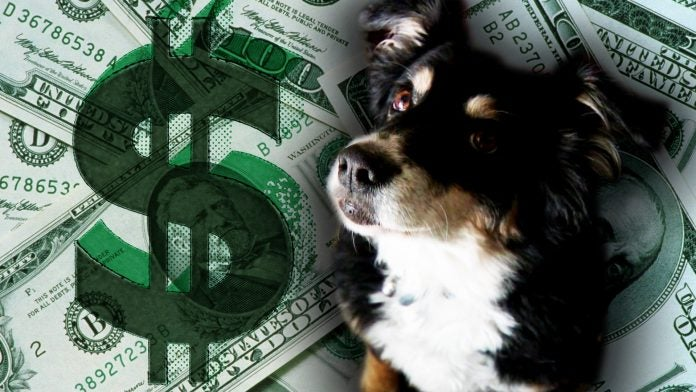 perro millonario lulu