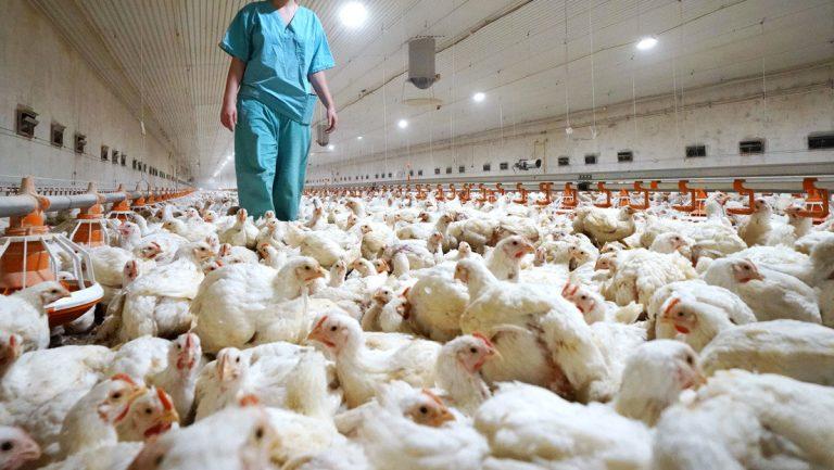 Rusia detecta el primer caso de gripe aviar H5N8 en humanos