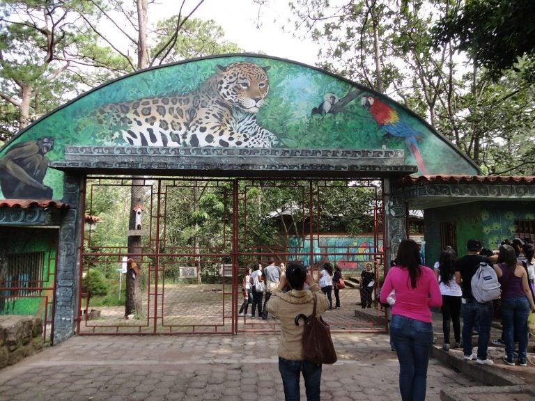 Zoológico en El Picacho reabre sus puertas tras más de un año cerrado