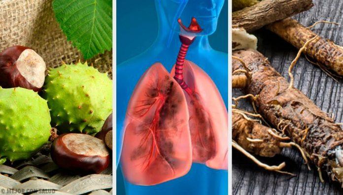 alimentos para fortalecer y limpiar los pulmones