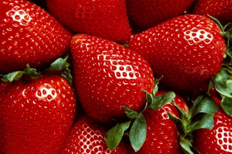 SALUD| Beneficios de las fresas para regular el colesterol y los triglicéridos