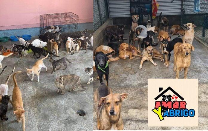 Amor y abrigo cierra rescates de animales.