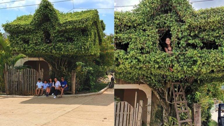 "Yoro: hondureño cautiva con diseño de ""casita"" en un árbol de Jocón"