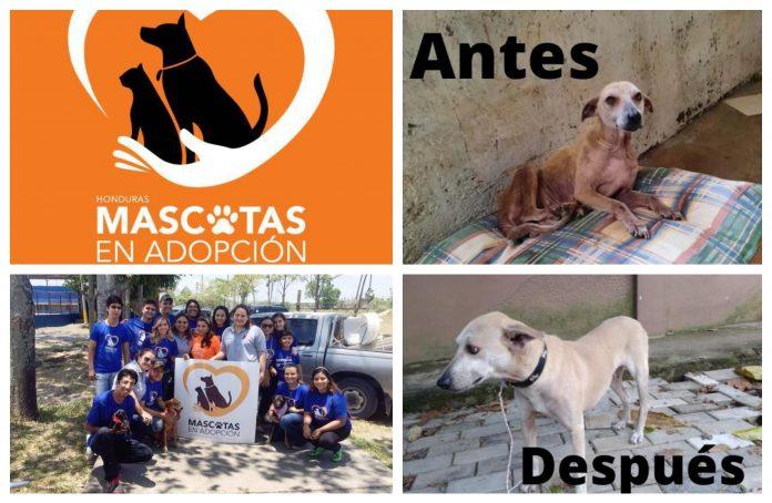 Mascotas en Adopción Honduras